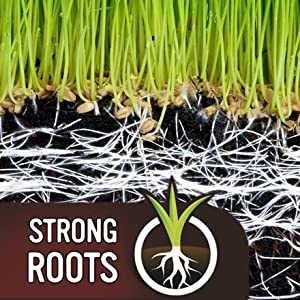 EverGreen Fast Grass Lawn Seed for Strong Roots