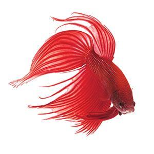 co2 aquarium plant food aquarium silicone aquarium supplies aquarium test kit aquarium test strips