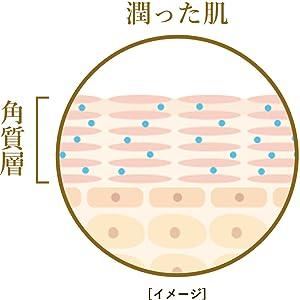 お肌の幹細胞の役割