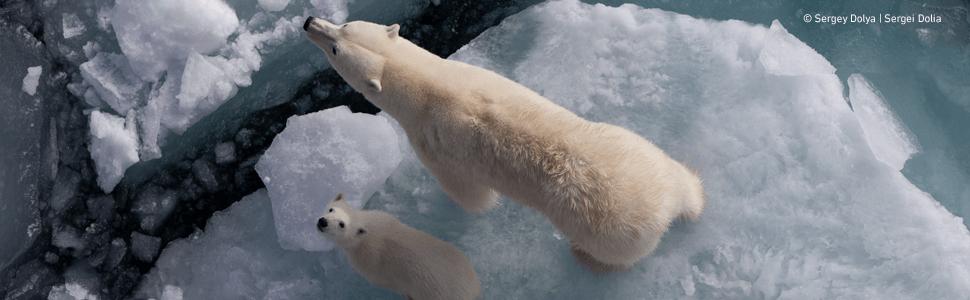 Science of Animals, Zoology, polar bears