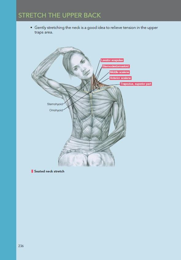 Delaviers womens strength training anatomy workouts frederic delaviers womens strength training anatomy workouts view larger fandeluxe Gallery