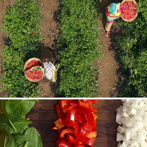 McCormick Gourmet spices herbs seasonings organic