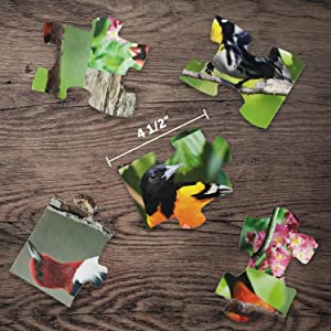 Dollhouse Miniature 1:12 Scale Plastic Bands #Tin1171 AZTEC IMPORTS