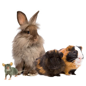 INNOVATIVELY DESIGNED TO SUPPORT THE INSTINCTUAL BEHAVIORS OF SMALL PETS