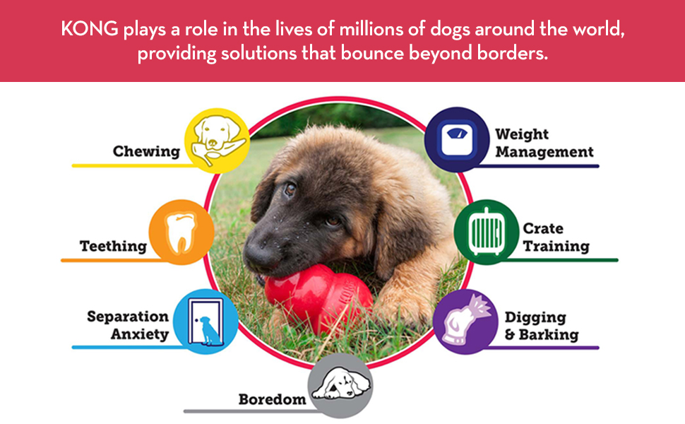 KONG plays a role in the lives of millions of dogs around the world providing solutions