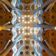 The spectacular ceiling inside Barcelona's Sagrada Família.