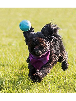 dog ball thrower, ball launcher, chuckit ball, balls for dogs, dog toy ball,