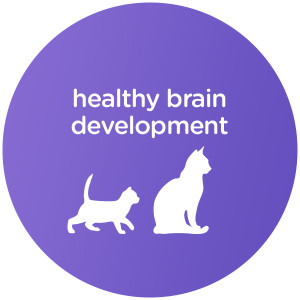 Specialized Nutrition to Support Healthy Growth and Development for Kittens