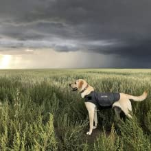 Thundershirt calming wraps helps dog to remain calm during thunderstorms