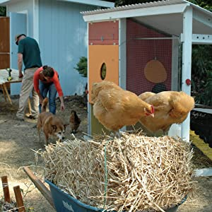 sustainable living, homestead, self-sufficiency, backyard, chickens, hens, bees, farm, goats, shed