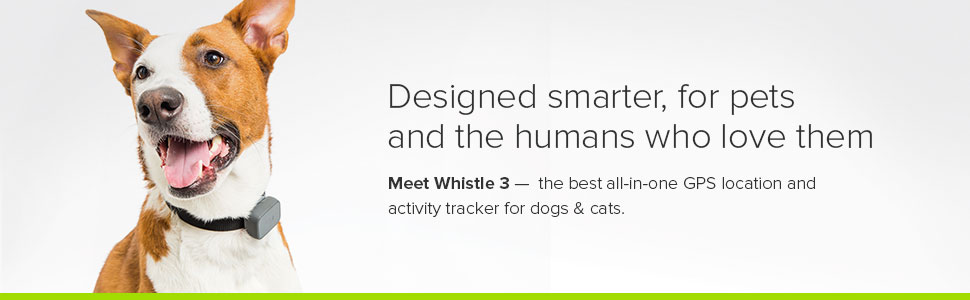dog animal pets cats monitor link akc tracking activity healthy smart