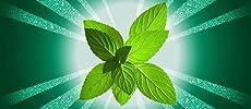 Mint flavored spearmint gum