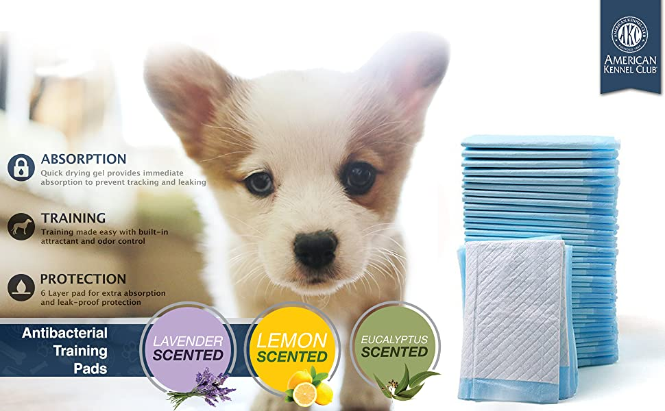AKC Puppy Pads, American Kennel Club, Dipers, Pet pee, pt potty, puppy pads for small indoor animals