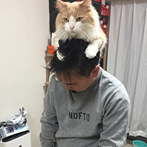 山内 猫 かまいたち