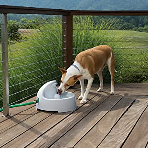 dog water fountain everflow filtered