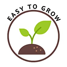 easy to grow