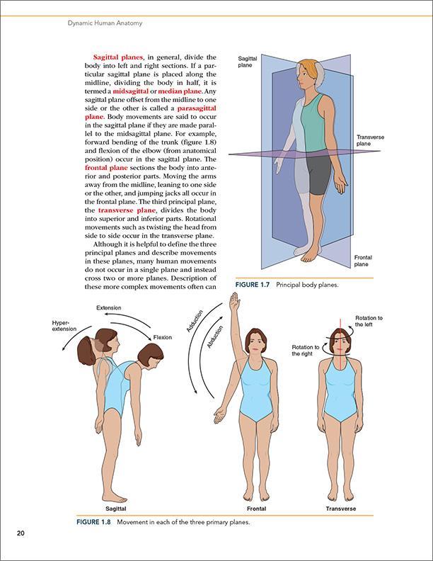 Dynamic Human Anatomy 9781492549871 Medicine Health Science