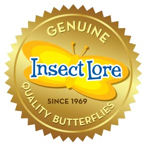 Genuine Insect Lore Quality Butterflies