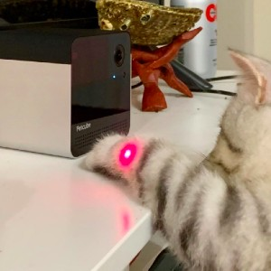 pet camera to exercise and play