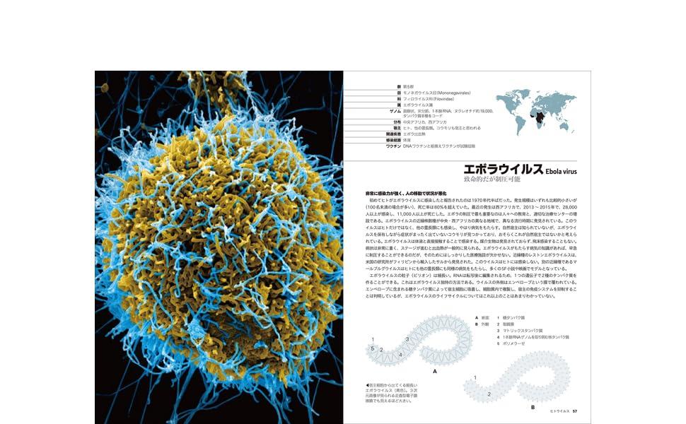 ウイルス図鑑 新型コロナ エボラ エイズ 感染症 細菌