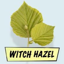 Heksenhazelaar is een natuurlijk samentrekkend middel voor vele huidtypes die overtollige olie verwijdert om vlekken te voorkomen