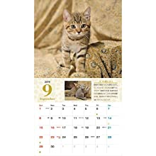 カレンダー2019 ネコの心が分かるカレンダー