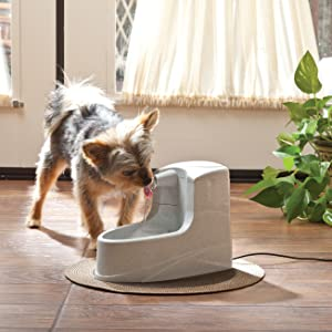 cat drinking water, water fountain for kitty, kitty fountain, keep cat hydrated, healthy cat