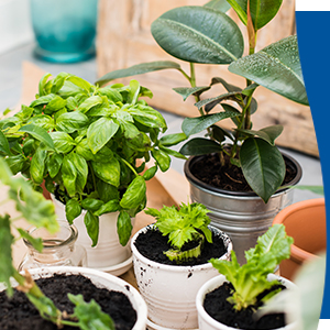 Use on all indoor and outdoor plants