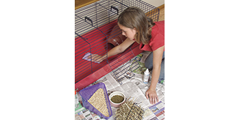 Cleaning, Cage, Pets