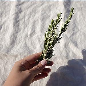 kapha dosha elements elemental ayurveda ayurvedic herbalism herbs holistic