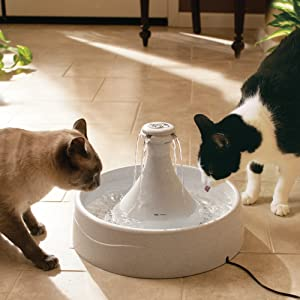 kitty water, doggie  bowl, filtered water for dogs, filtered water for cats, cat water fountain