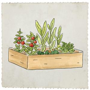 Gardening, raised bed gardening, herbal medicine, botany, herbs