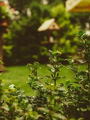 S&M 548659 Soporte de Pared para Mangueras de Jardín, Negro: Amazon.es: Jardín