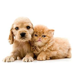 Rossloza Aloe Vera Dog and Cat Pet Shampoo, 200 ml