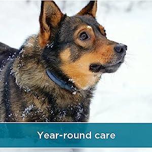 Year round care