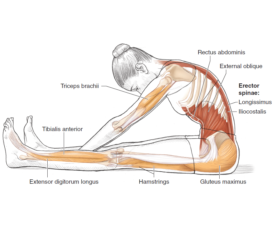 Pilates Anatomy: Rael Isacowitz, Karen Clippinger: 9780736083867 ...