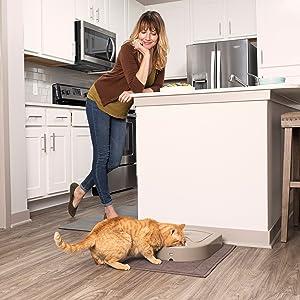 cat pet dog feeder automatic food bowl