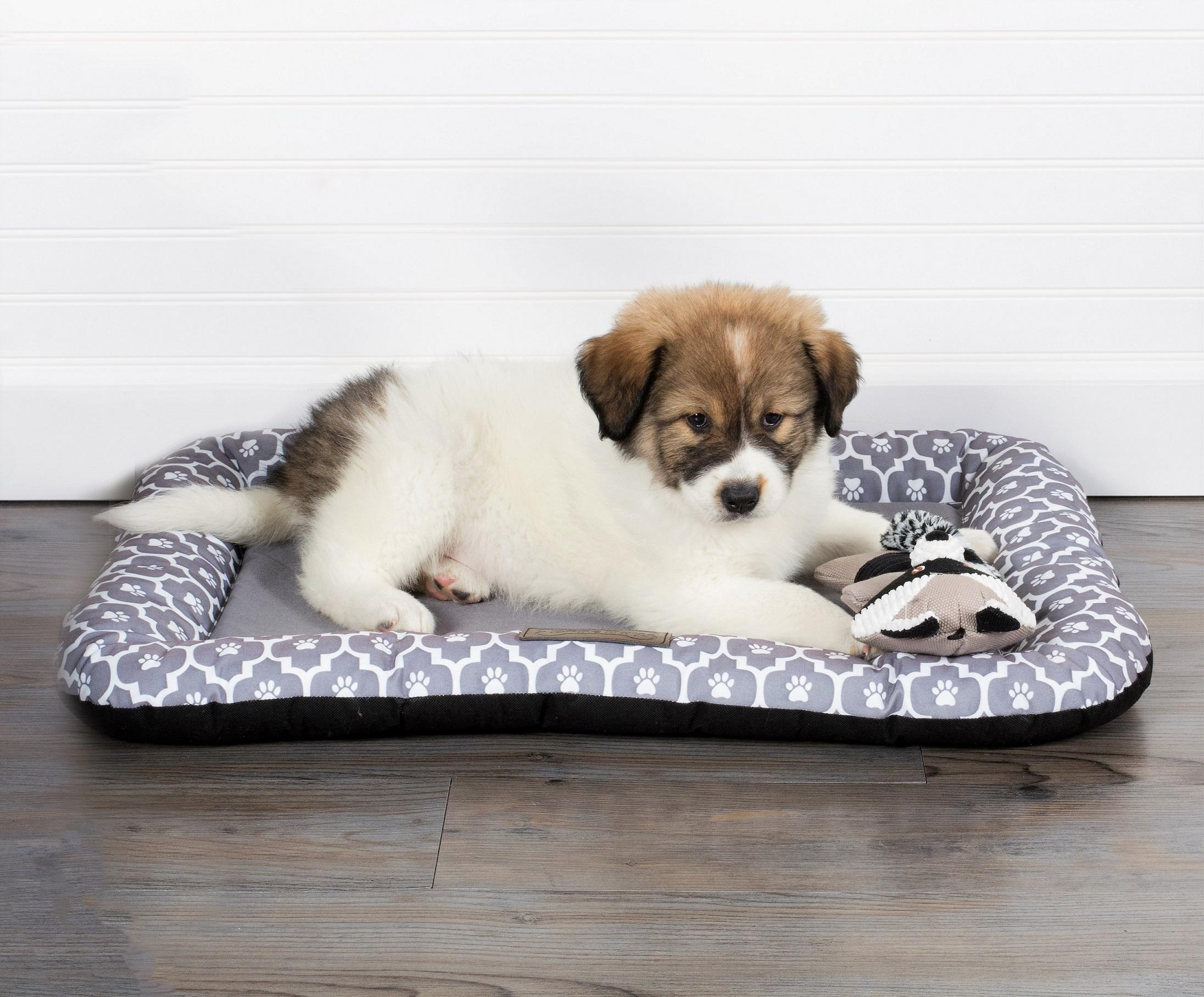Amazon.com : Bone Dry DII Stripe Embroidered Paw Print Pet