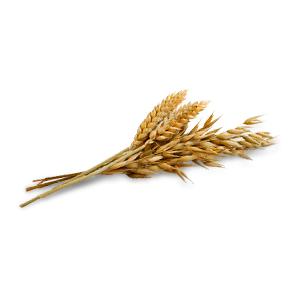 AVEENO ACTIVE NATURALS - Colloidal Oatmeal