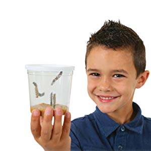 A little boy holding caterpillars in a cup