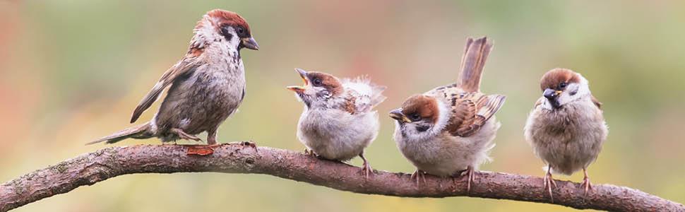 birds, birding, north american birds