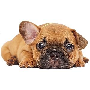Alimento seco para cachorros y animales jóvenes con cordero y arroz de todas las especies
