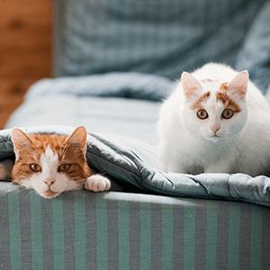 cat hiding, help cat hiding, stop cat hiding, feliway multicat