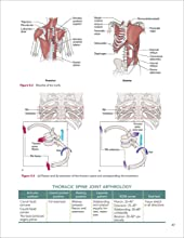 Thoracic Spine Joint Arthrology