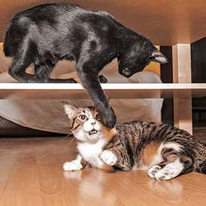 stop cat scratching, feliway, feliway multicat
