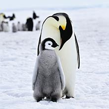 北極スマイル・南極スマイル カレンダー 2020 11月