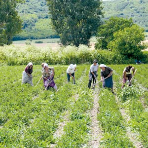 Traditional Medicinals Organic Peppermint Herbal Tea