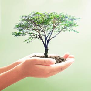 Rohstoffauswahl und Produktentwicklung