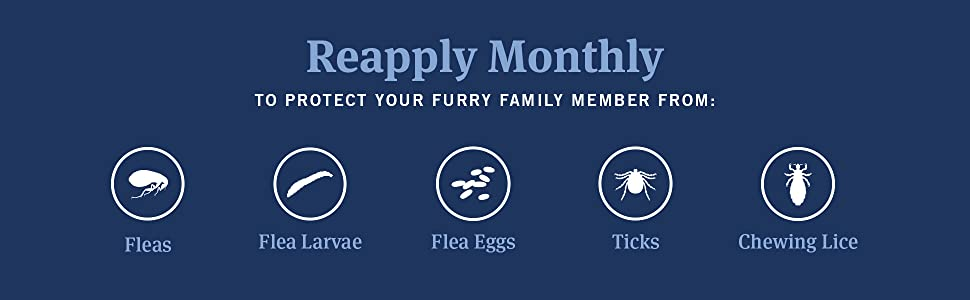 Reapply monthly to protect your cat from fleas flea larvae flea eggs ticks and chewing lice