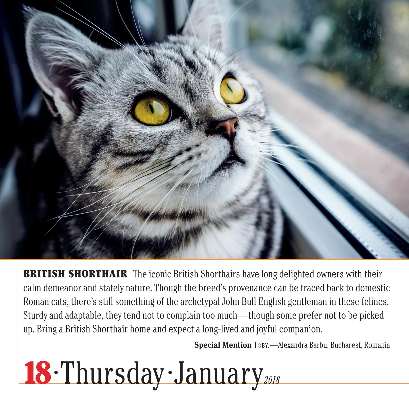 365 cats page a day calendar 2018 workman publishing 9781523500796 books amazon ca